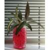 Гидрогель декоративный water crystal