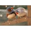 Услуги орнитолога,  все виды диагностики птицы