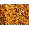 Цветочна пыльца (Натуральный продукт пчеловодства)