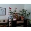 однокомн.  хорошая квартира,  Прилуцкая,  транспорт рядом,  в отл. состоянии,  быт. техника,  с мебелью,  +счетчики