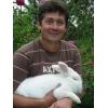 Кролики племенные